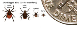 Learn 7 surprising things about Lyme Disease Symptoms. Awareness is so important since the rash is an unpredictable symptom. Too many people get lyme disease without a rash. Learn the facts to prevent chronic lyme disease - early treatment is important. Is your family at risk? @naturalsoapmom.com #lymedisease #lyme #lymediseasesymptoms #lymewarrior #lymediseaseawareness #lymediseasesymptoms
